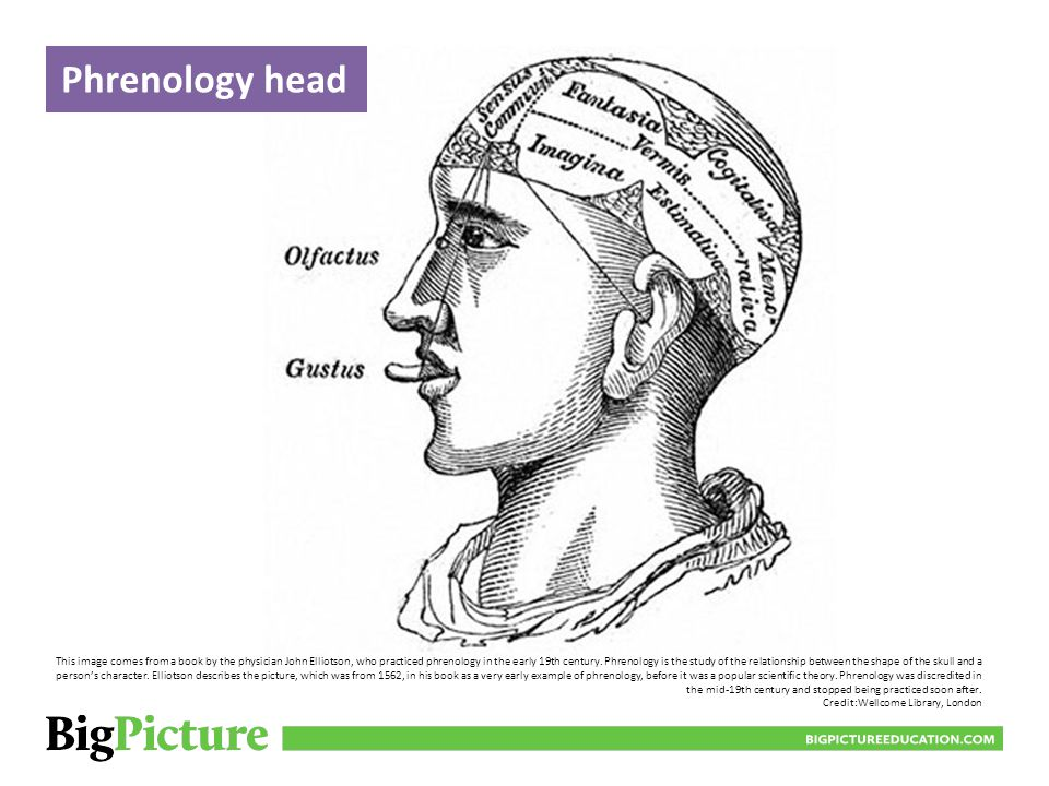 Skull marked for phrenology BIGPICTUREEDUCATION.COM Phrenology, the study of the relationship between a person's character and the shape of their skull, was a popular technique in the early 19th century.