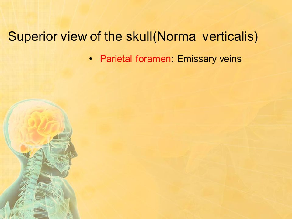 Superior view of the skull(Norma verticalis) Parietal foramen: Emissary veins