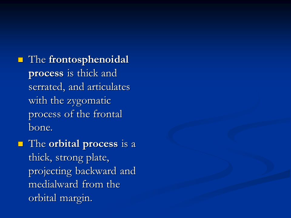 The frontosphenoidal process is thick and serrated, and articulates with the zygomatic process of the frontal bone.
