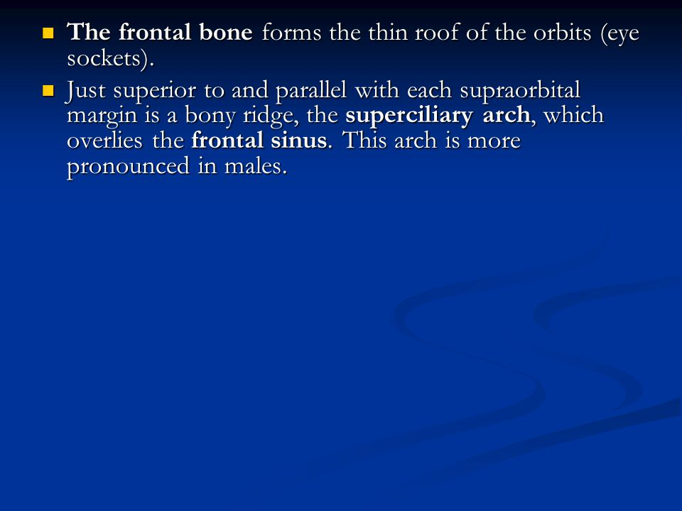 The frontal bone forms the thin roof of the orbits (eye sockets).