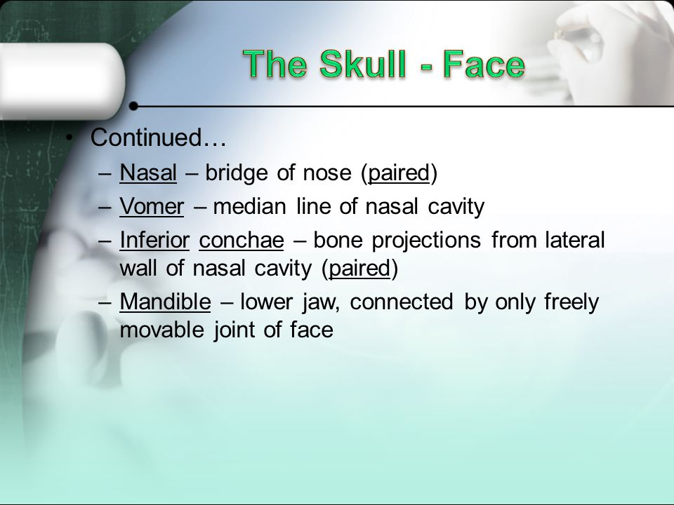 Continued… –Nasal – bridge of nose (paired) –Vomer – median line of nasal cavity –Inferior conchae – bone projections from lateral wall of nasal cavity (paired) –Mandible – lower jaw, connected by only freely movable joint of face