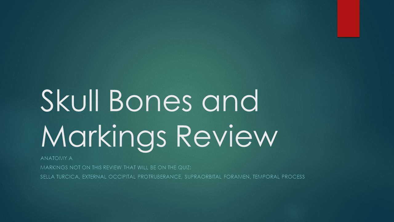 Skull Bones and Markings Review ANATOMY A MARKINGS NOT ON THIS REVIEW THAT WILL BE ON THE QUIZ: SELLA TURCICA, EXTERNAL OCCIPITAL PROTRUBERANCE, SUPRAORBITAL FORAMEN, TEMPORAL PROCESS