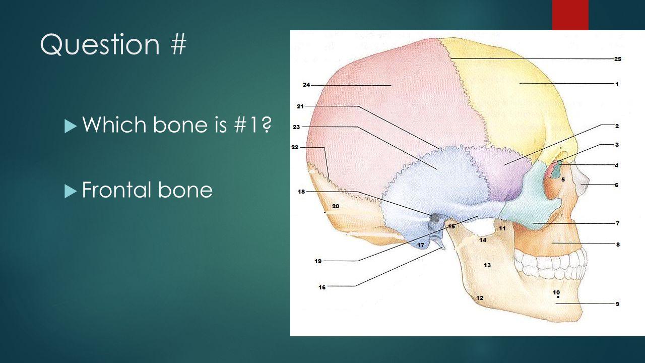 Question #  Which bone is #1?  Frontal bone