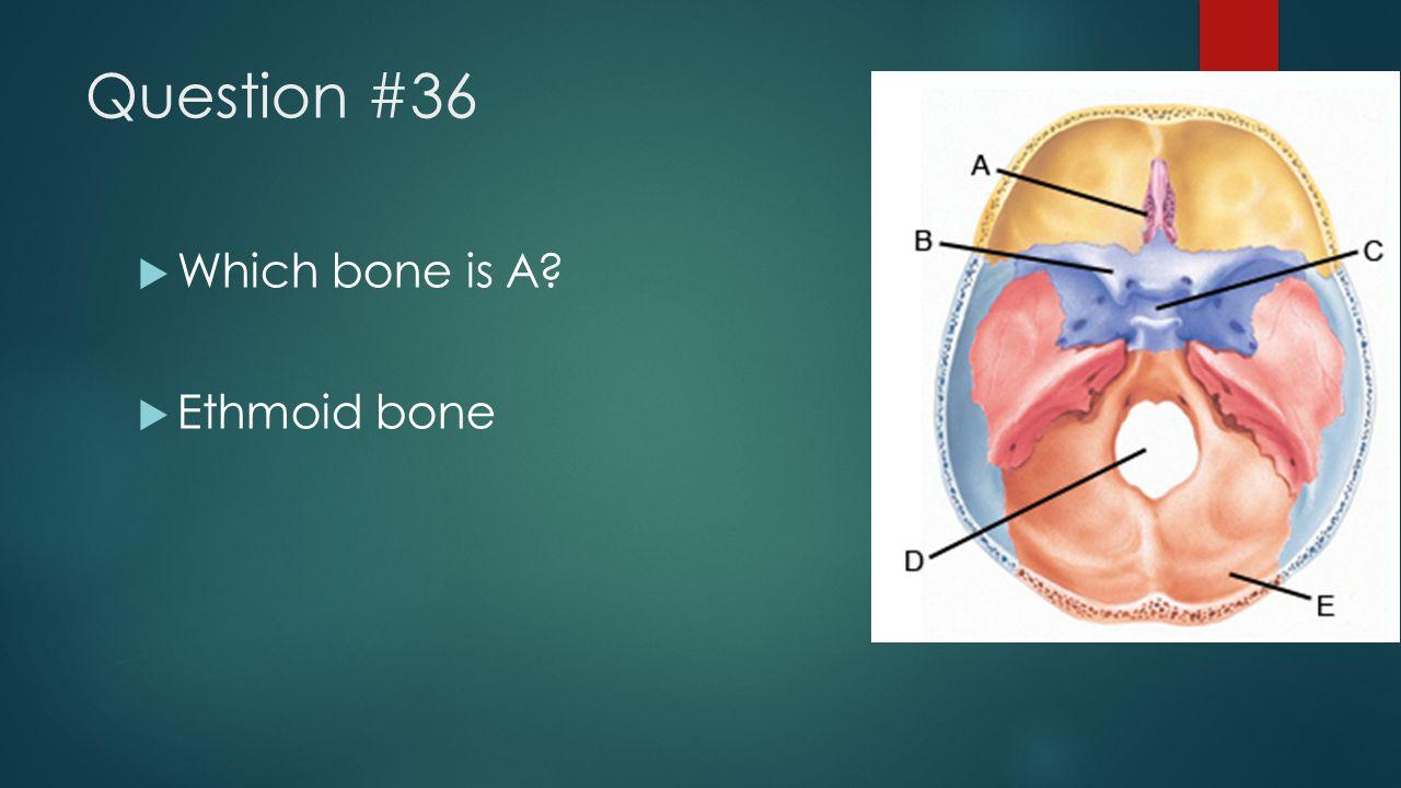 Question #36  Which bone is A?  Ethmoid bone