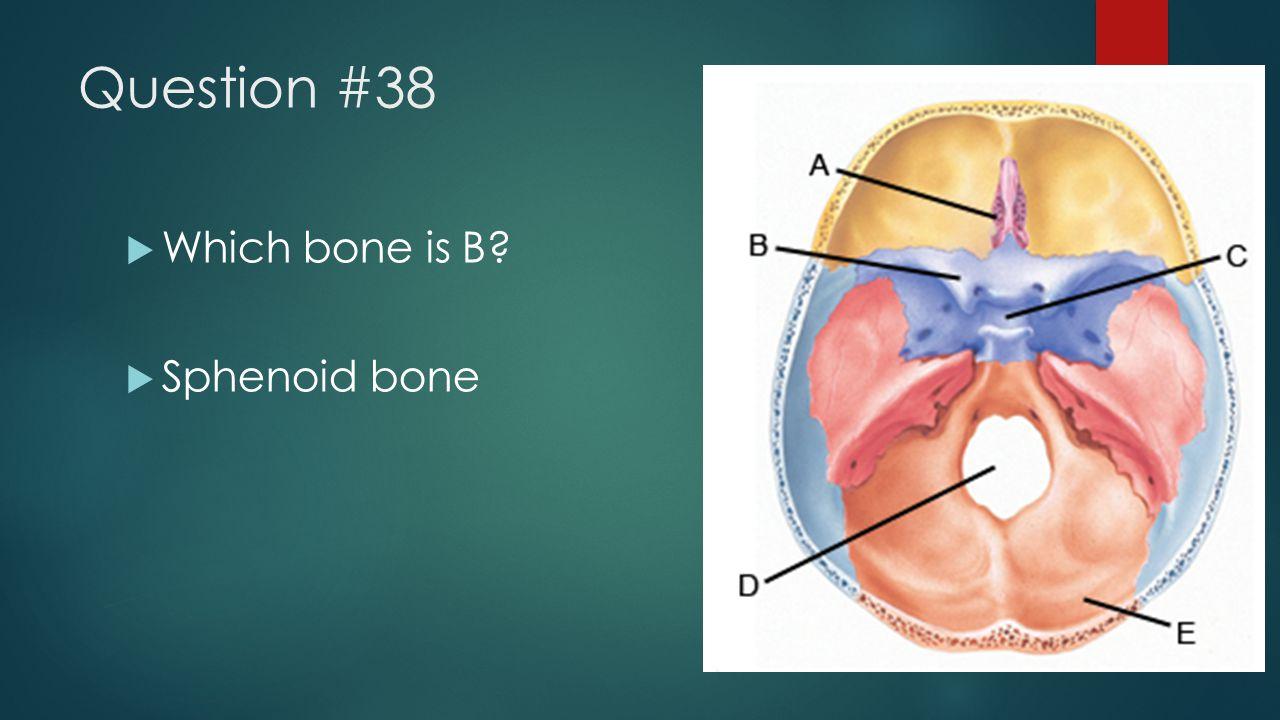 Question #38  Which bone is B?  Sphenoid bone