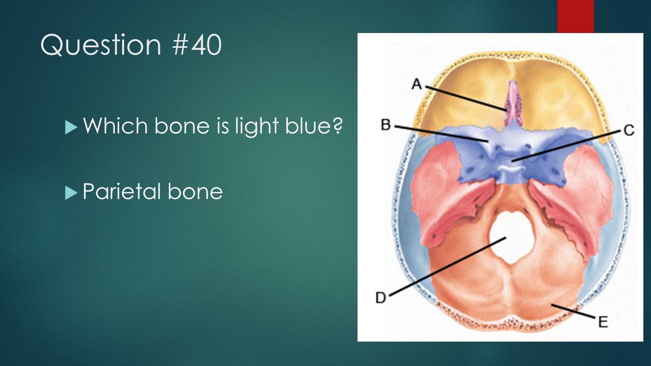 Question #40  Which bone is light blue?  Parietal bone