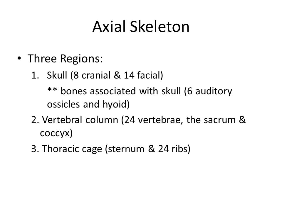 The Axial Skeleton Forms longitudinal axis of the body 80 bones 40% of the bones in the human body