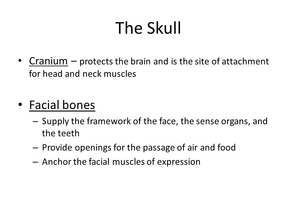 The Skull The bones of the skull protect the brain and guard the entrances to the digestive & respiratory systems The skull (22 bones), the body's mos