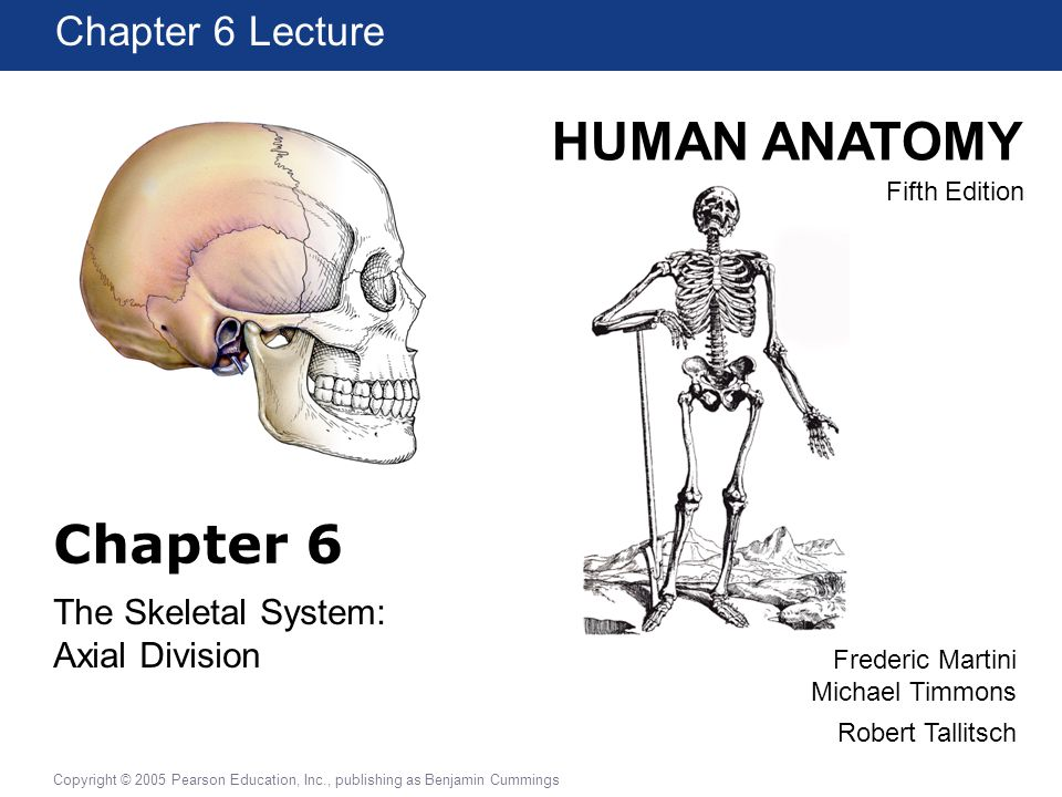 HUMAN ANATOMY Fifth Edition Chapter 1 Lecture Copyright © 2005 Pearson Education, Inc., publishing as Benjamin Cummings Frederic Martini Michael Timmo
