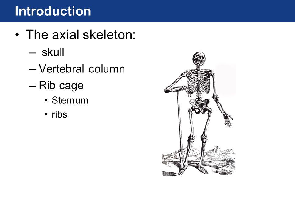 Introduction The axial skeleton: – skull –Vertebral column –Rib cage Sternum ribs