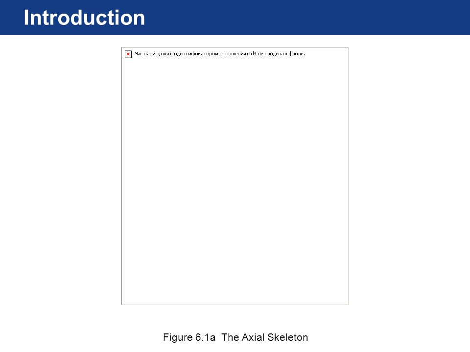 Figure 6.1a The Axial Skeleton Introduction