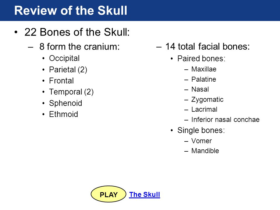 PLAY The Skull 22 Bones of the Skull: – 8 form the cranium: Occipital Parietal (2) Frontal Temporal (2) Sphenoid Ethmoid Review of the Skull –14 total