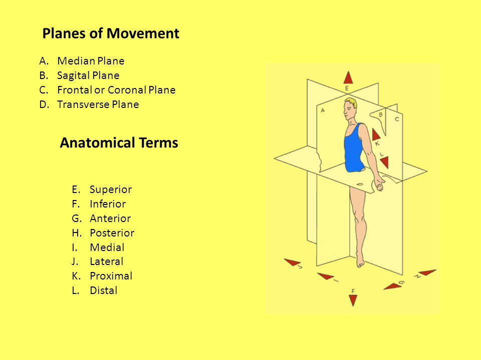 Planes of Movement A.Median Plane B.Sagital Plane C.Frontal or Coronal Plane D.Transverse Plane E.Superior F.Inferior G.Anterior H.Posterior I.Medial J.Lateral K.Proximal L.Distal Anatomical Terms