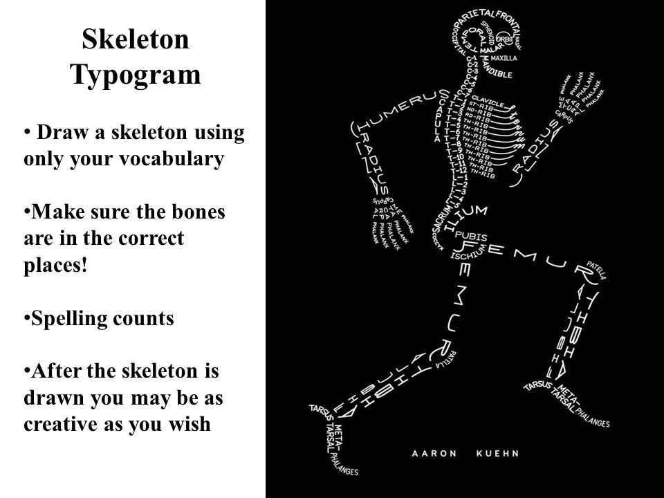 16 Skeleton Typogram Draw a skeleton using only your vocabulary Make sure the bones are in the correct places! Spelling counts After the skeleton is d
