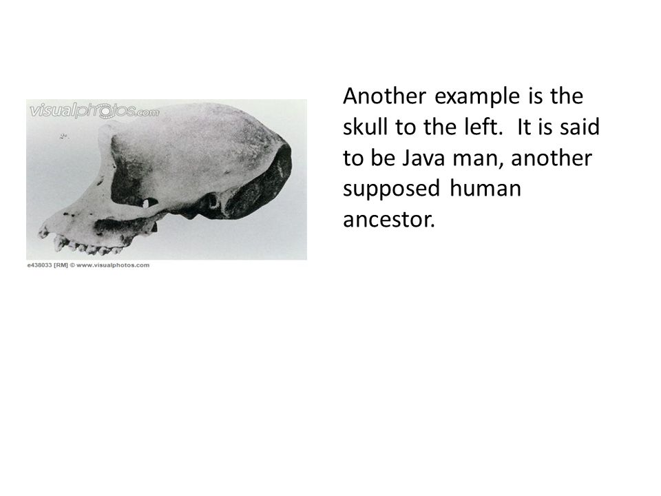 Another example is the skull to the left.