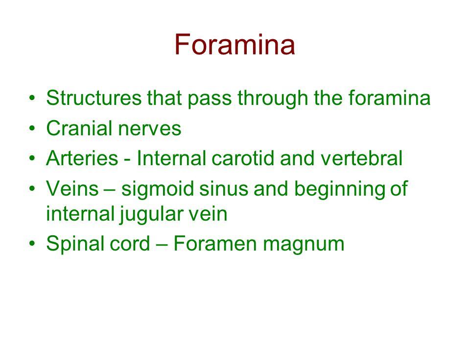 Foramina Structures that pass through the foramina Cranial nerves Arteries - Internal carotid and vertebral Veins – sigmoid sinus and beginning of int