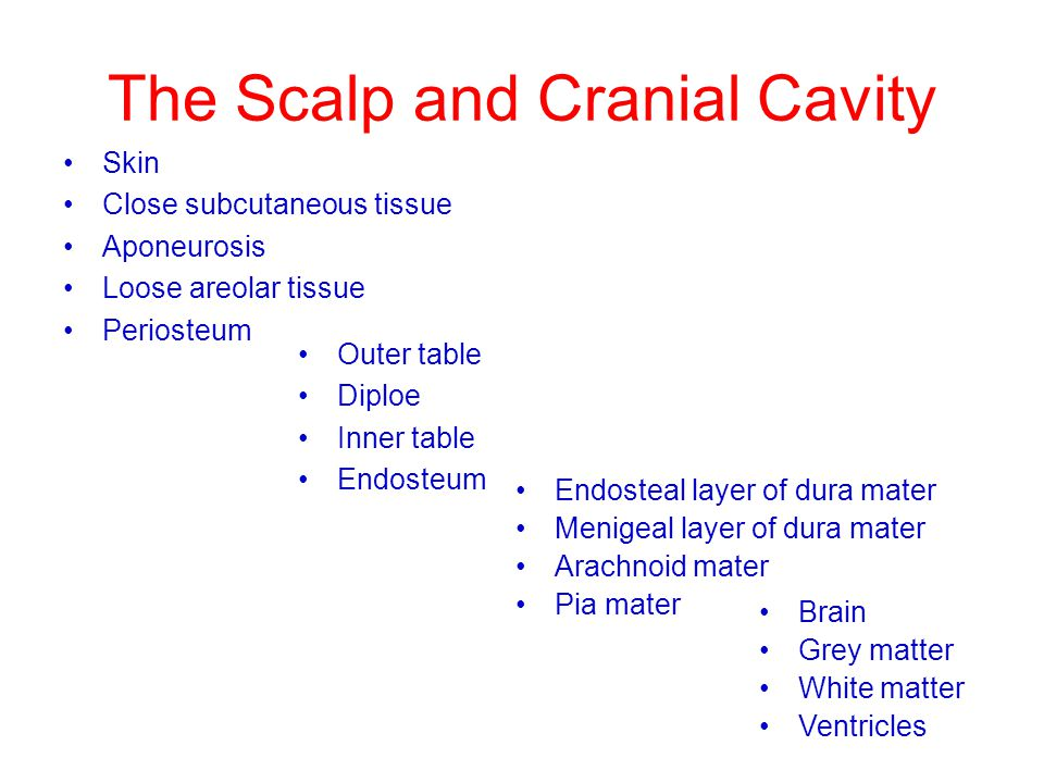 The Scalp and Cranial Cavity Skin Close subcutaneous tissue Aponeurosis Loose areolar tissue Periosteum Outer table Diploe Inner table Endosteum Endos