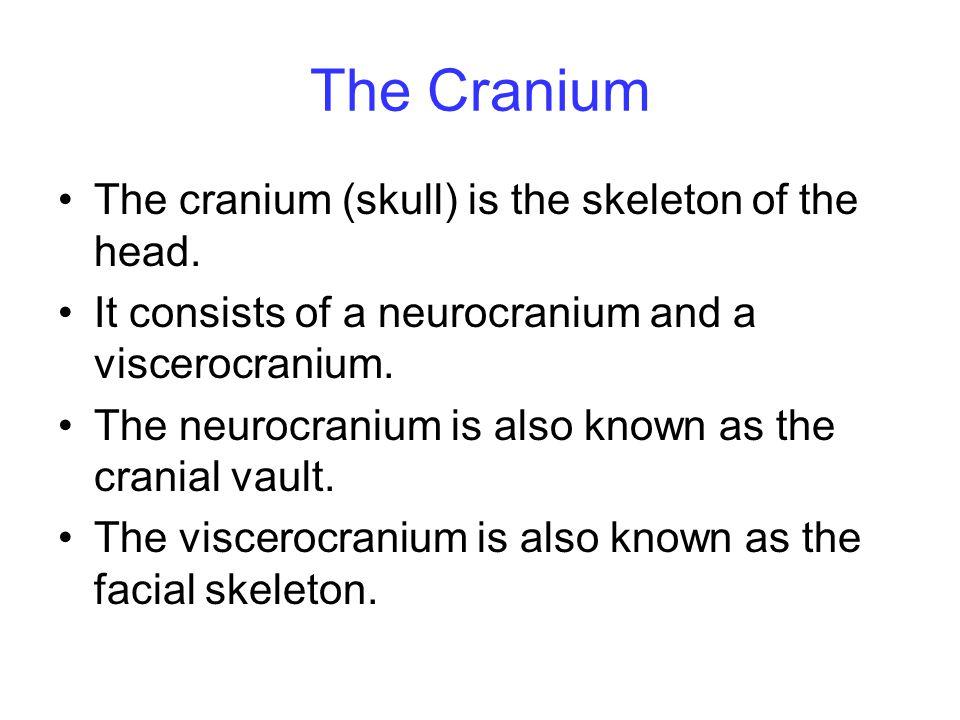 The Cranium The cranium (skull) is the skeleton of the head. It consists of a neurocranium and a viscerocranium. The neurocranium is also known as the