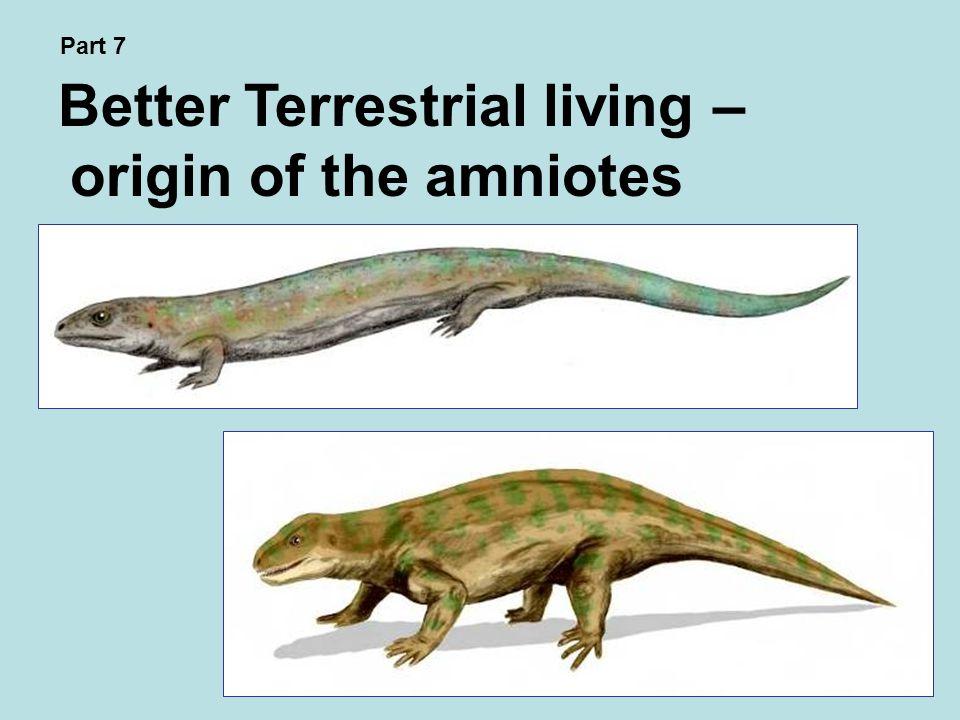 Better Terrestrial living – origin of the amniotes Part 7