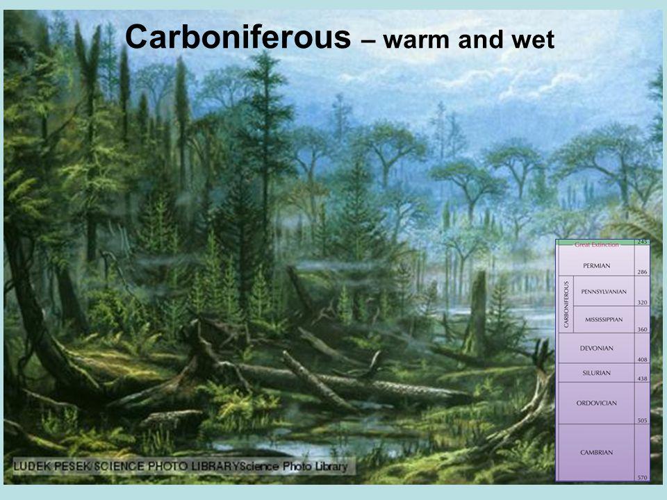 Carboniferous – warm and wet