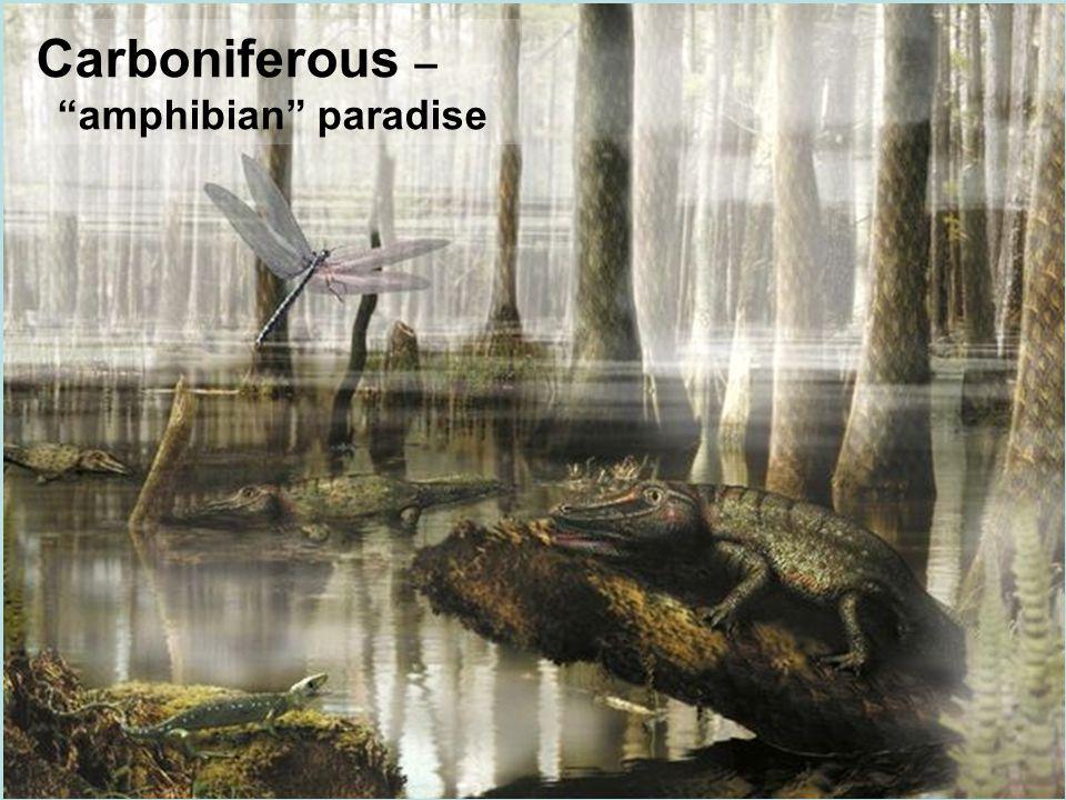 """Carboniferous – """"amphibian"""" paradise"""