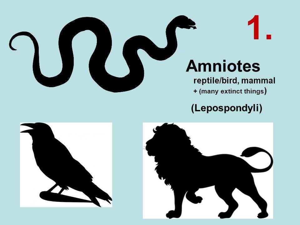 Amniotes reptile/bird, mammal + (many extinct things ) (Lepospondyli) 1.