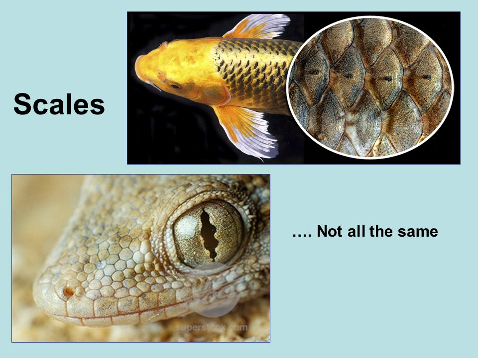 Scales …. Not all the same