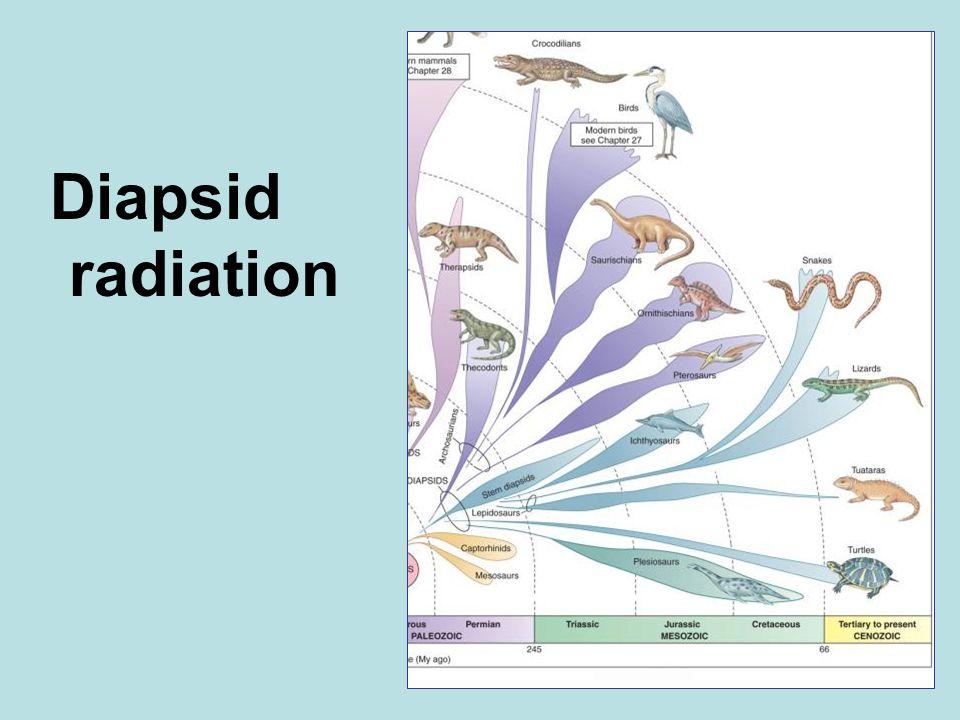 Diapsid radiation
