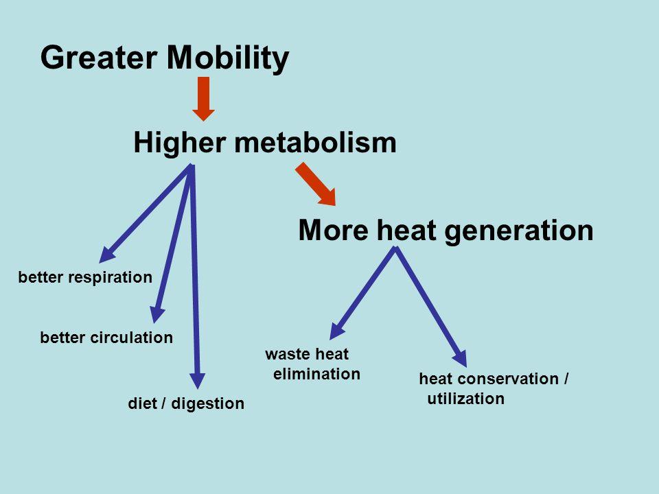 Higher metabolism More heat generation better respiration better circulation heat conservation / utilization waste heat elimination diet / digestion