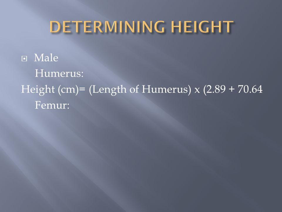  Male Humerus: Height (cm)= (Length of Humerus) x (2.89 + 70.64 Femur:
