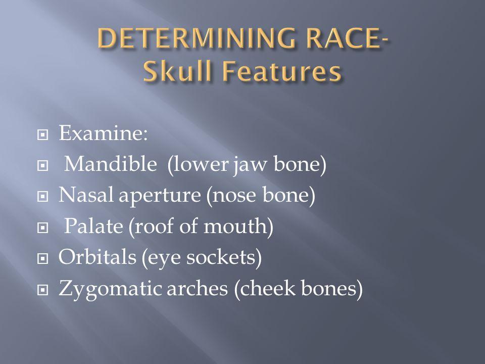  Examine:  Mandible (lower jaw bone)  Nasal aperture (nose bone)  Palate (roof of mouth)  Orbitals (eye sockets)  Zygomatic arches (cheek bones)