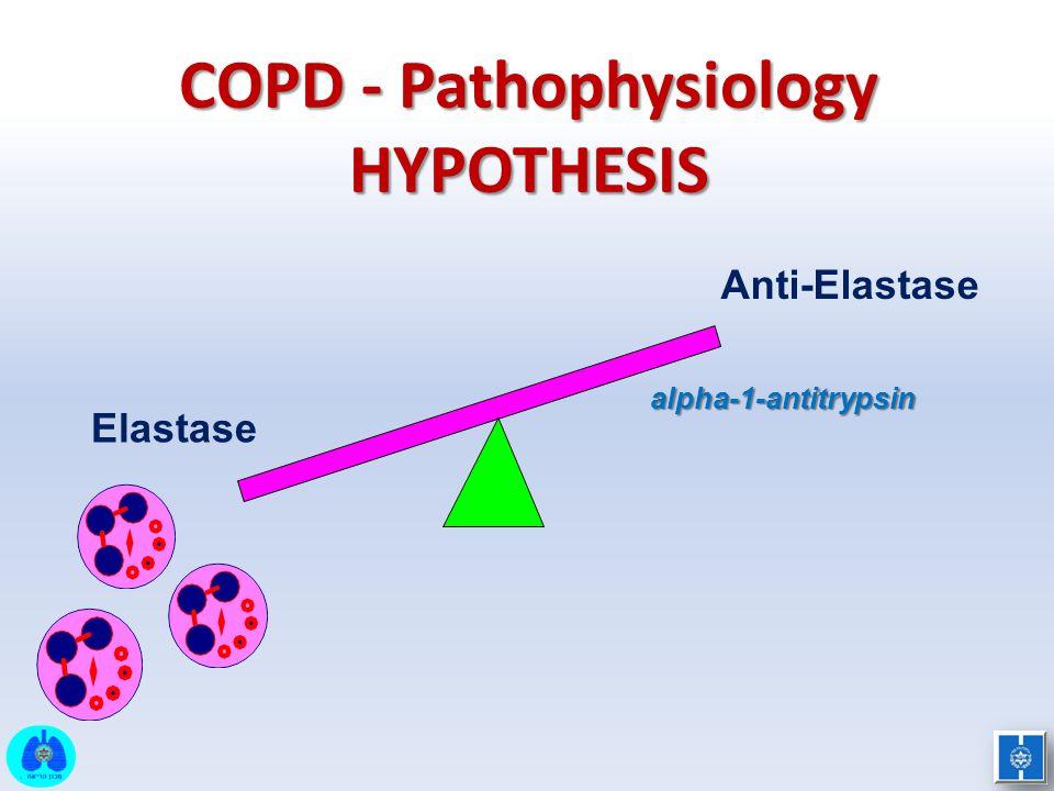 alpha-1-antitrypsin Elastase Anti-Elastase COPD - Pathophysiology HYPOTHESIS