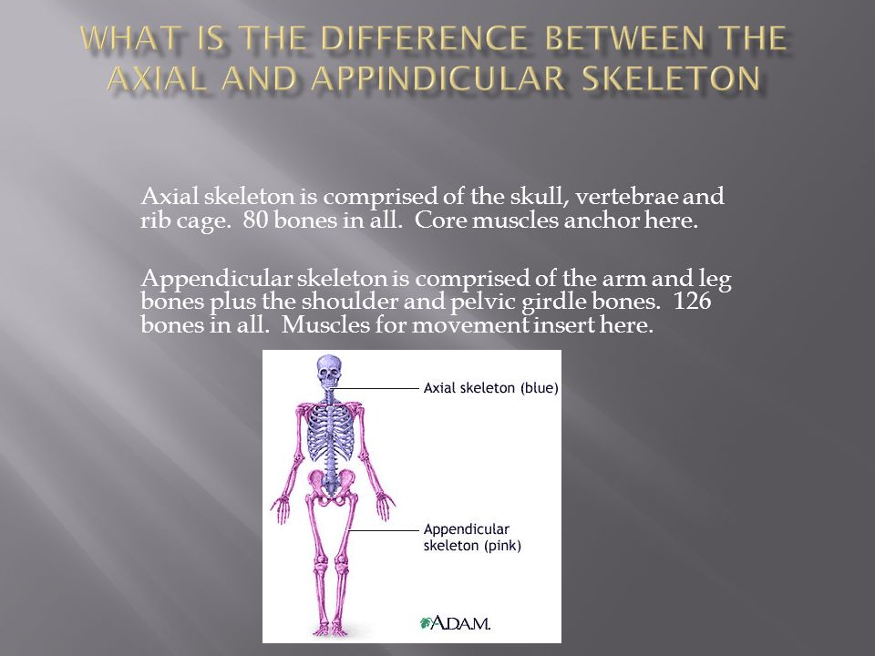 Bone marrow is found as a yellowish (fat) or red (blood) substance found inside the long bones of the body.