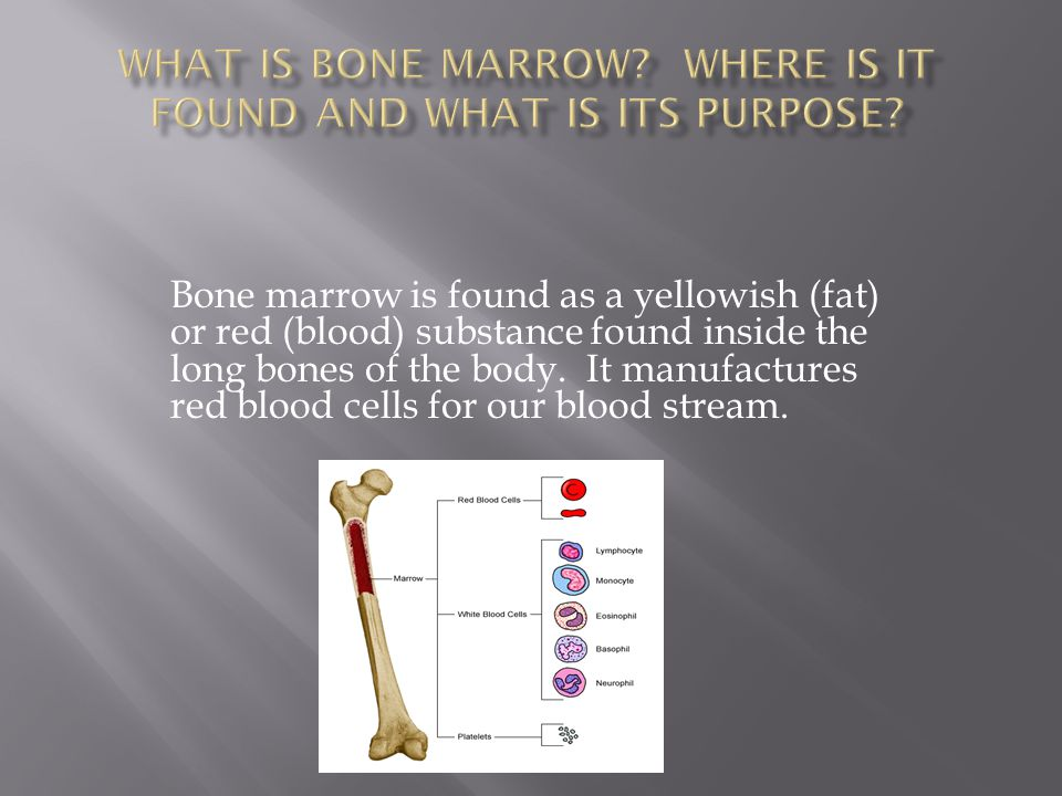 Bone marrow is found as a yellowish (fat) or red (blood) substance found inside the long bones of the body. It manufactures red blood cells for our bl