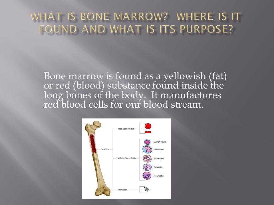Long bone – femur, humerus Short bone – wrist carpal, foot tarsal Irregular bone –vertebrae Sesmoid – patella (floating bone) Flat bone – skull or rib