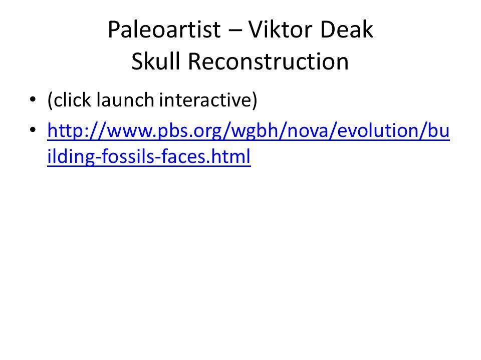 Paleoartist – Viktor Deak Skull Reconstruction (click launch interactive) http://www.pbs.org/wgbh/nova/evolution/bu ilding-fossils-faces.html http://www.pbs.org/wgbh/nova/evolution/bu ilding-fossils-faces.html