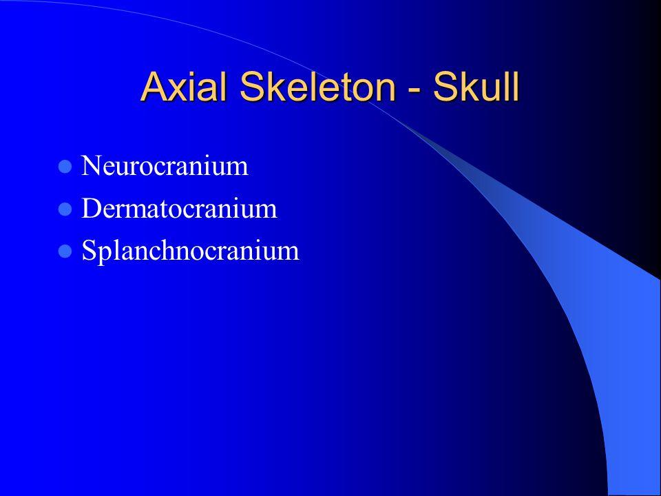 Axial Skeleton - Skull Neurocranium Dermatocranium Splanchnocranium