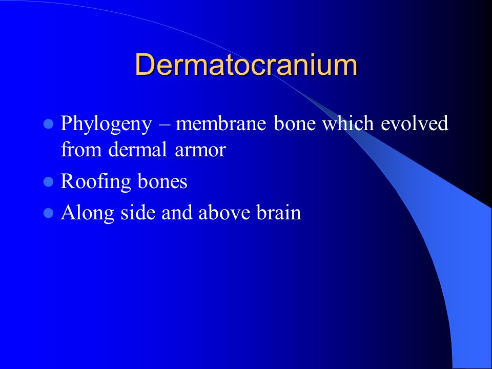 Dermatocranium Phylogeny – membrane bone which evolved from dermal armor Roofing bones Along side and above brain