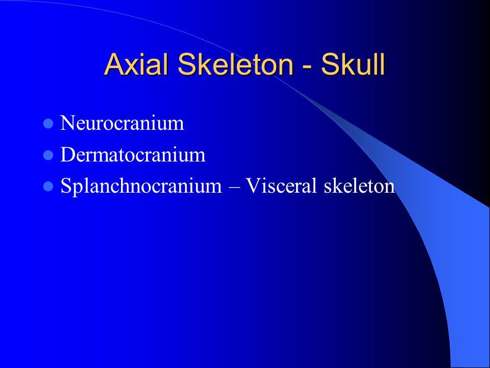 Axial Skeleton - Skull Neurocranium Dermatocranium Splanchnocranium – Visceral skeleton