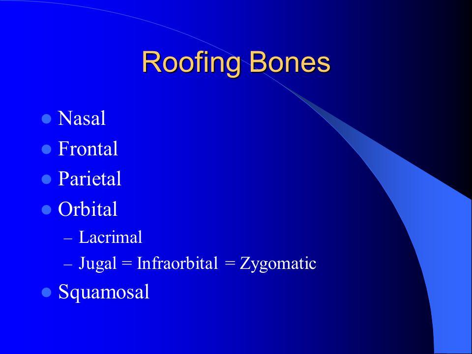 Roofing Bones Nasal Frontal Parietal Orbital – Lacrimal – Jugal = Infraorbital = Zygomatic Squamosal