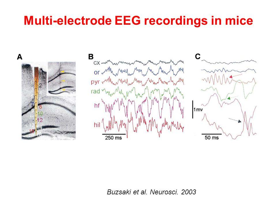 Multi-electrode EEG recordings in mice Buzsaki et al. Neurosci. 2003