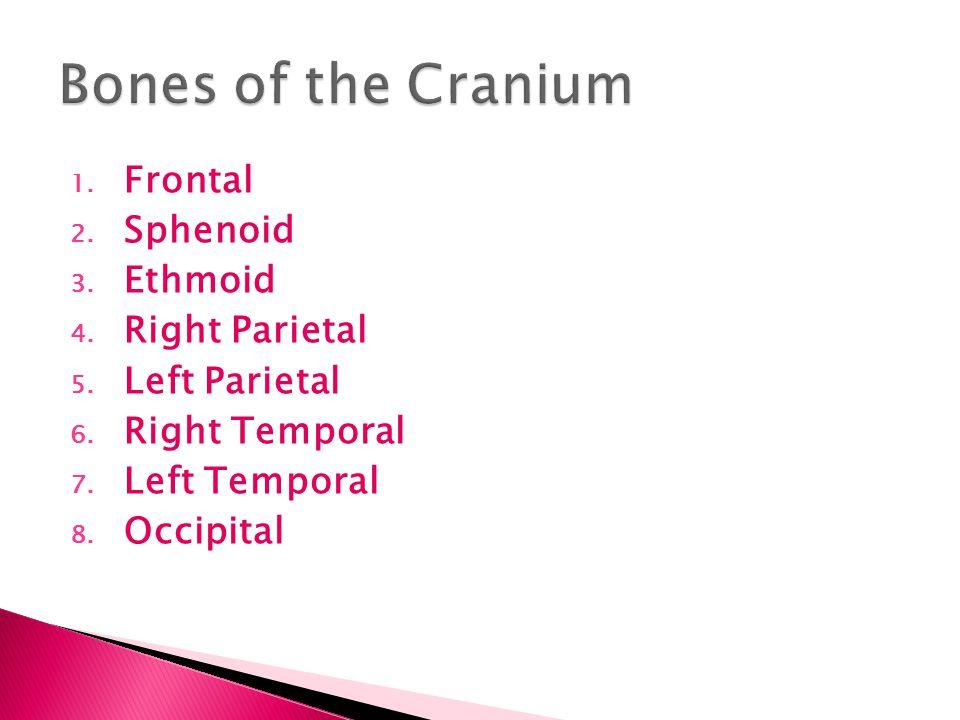 1.Maxillae 2. Palantine 3. Zygomatic 4. Lacrimal 5.
