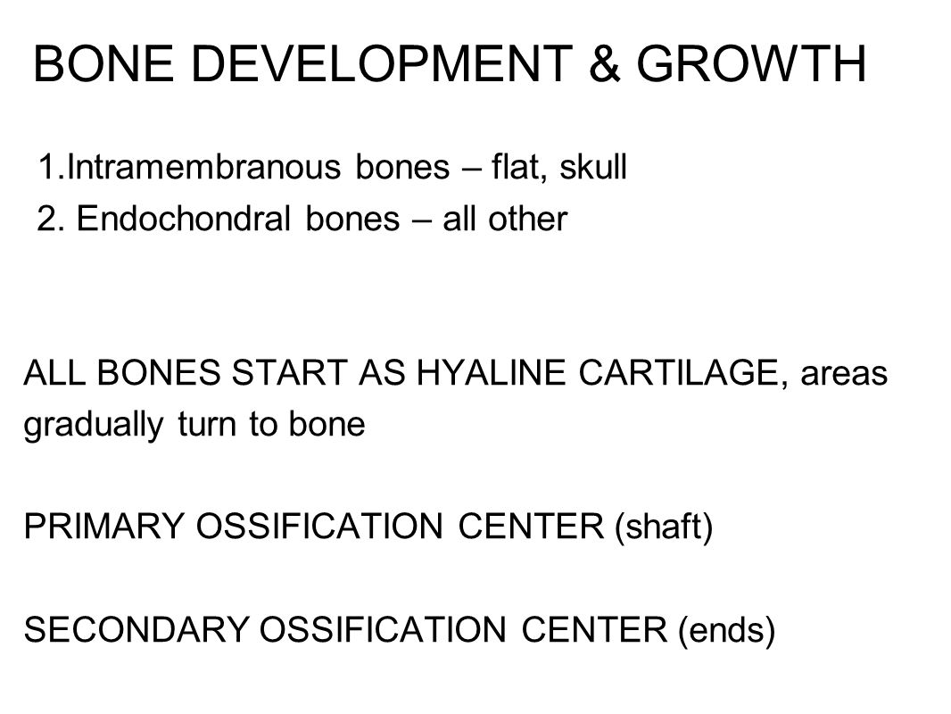 BONE DEVELOPMENT & GROWTH 1.Intramembranous bones – flat, skull 2. Endochondral bones – all other ALL BONES START AS HYALINE CARTILAGE, areas graduall