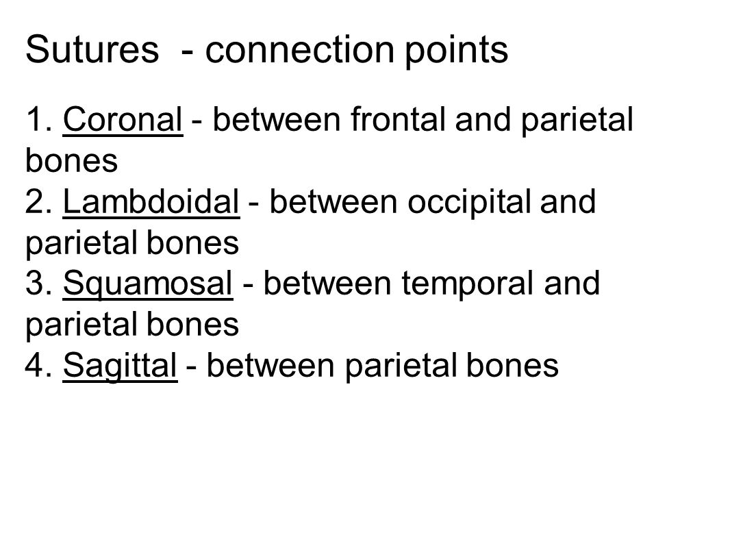 Sutures - connection points 1.Coronal - between frontal and parietal bones 2.