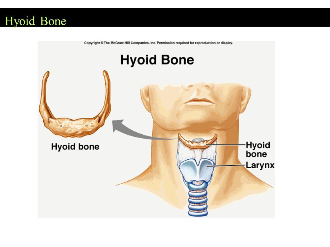 Hyoid Bone
