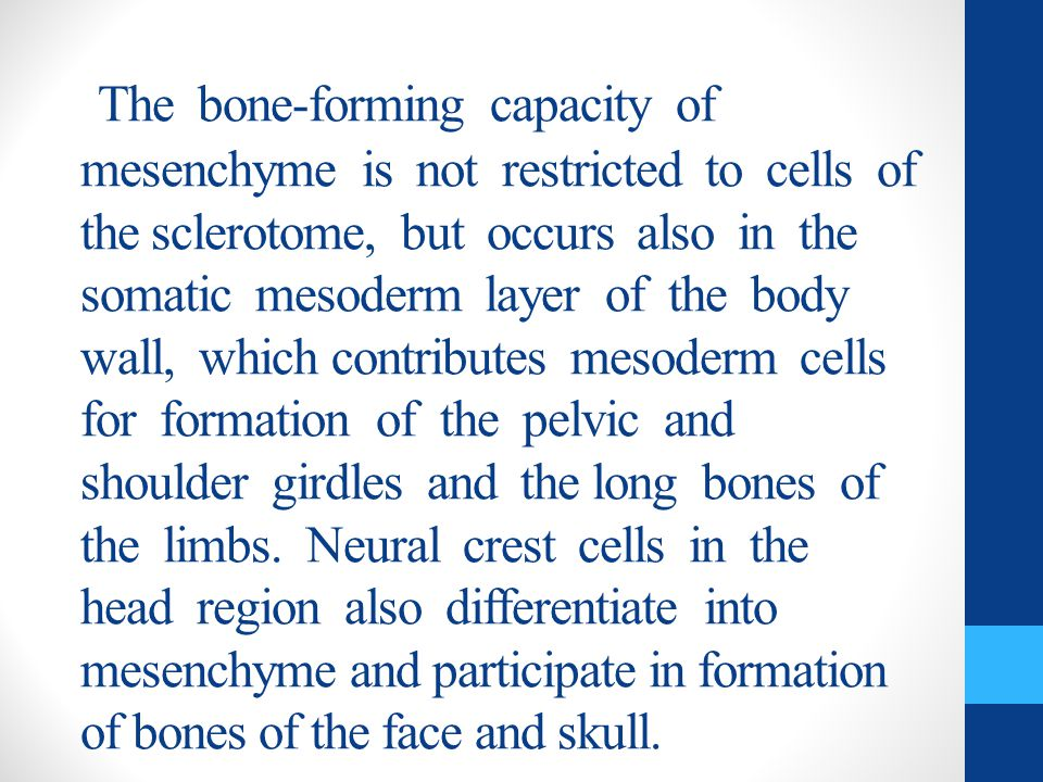 The bone-forming capacity of mesenchyme is not restricted to cells of the sclerotome, but occurs also in the somatic mesoderm layer of the body wall, which contributes mesoderm cells for formation of the pelvic and shoulder girdles and the long bones of the limbs.