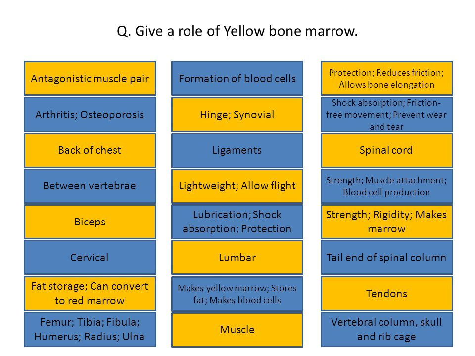 Q. Give a role of Yellow bone marrow.