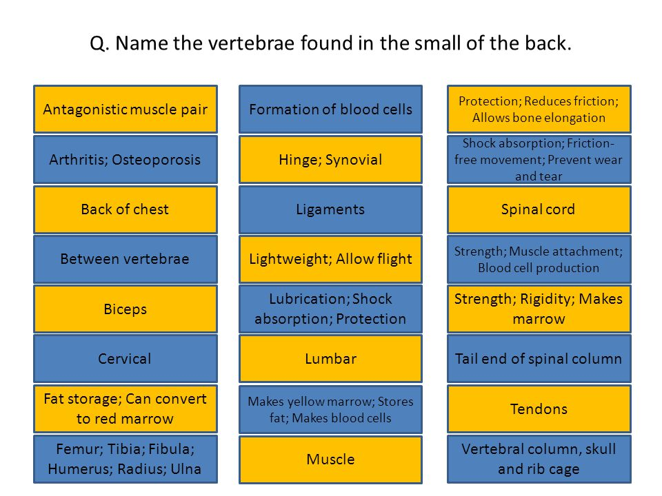 Q. Name the vertebrae found in the small of the back.