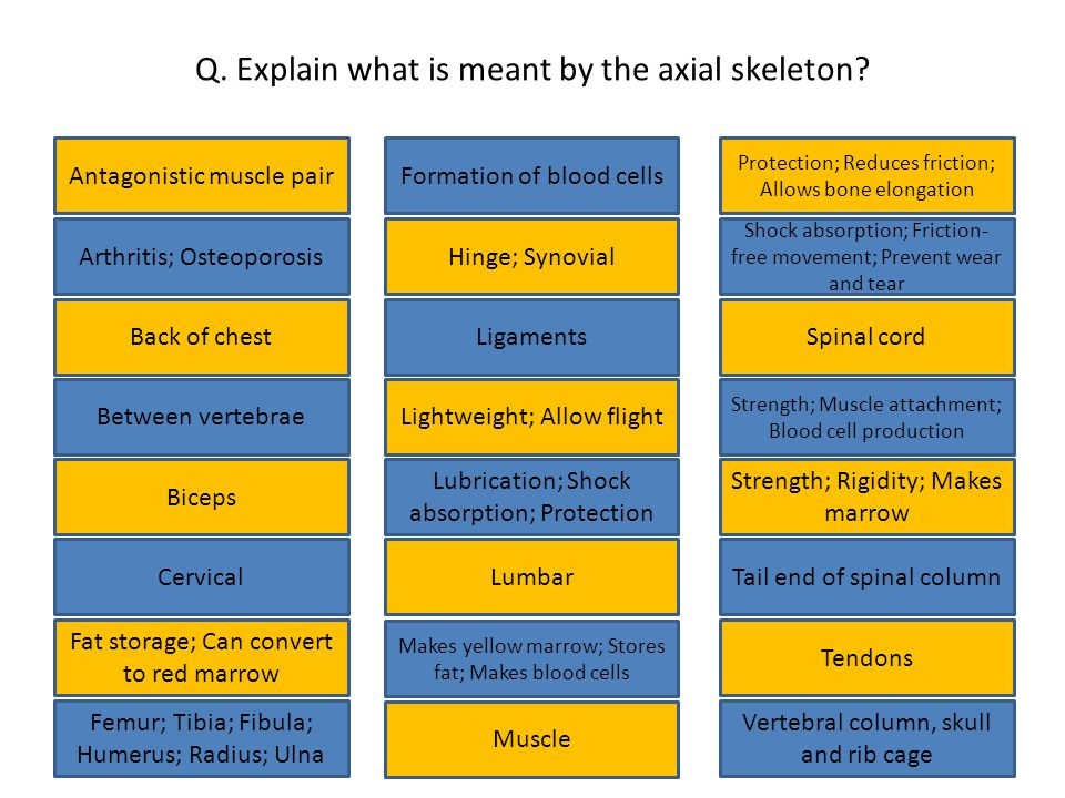 Q. Explain what is meant by the axial skeleton.