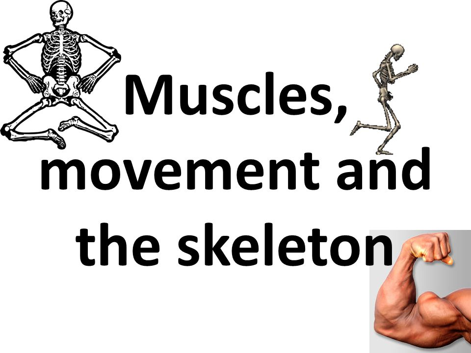 The Skeletal system is A-Maze-ing Start To carry on with the PP click the red button
